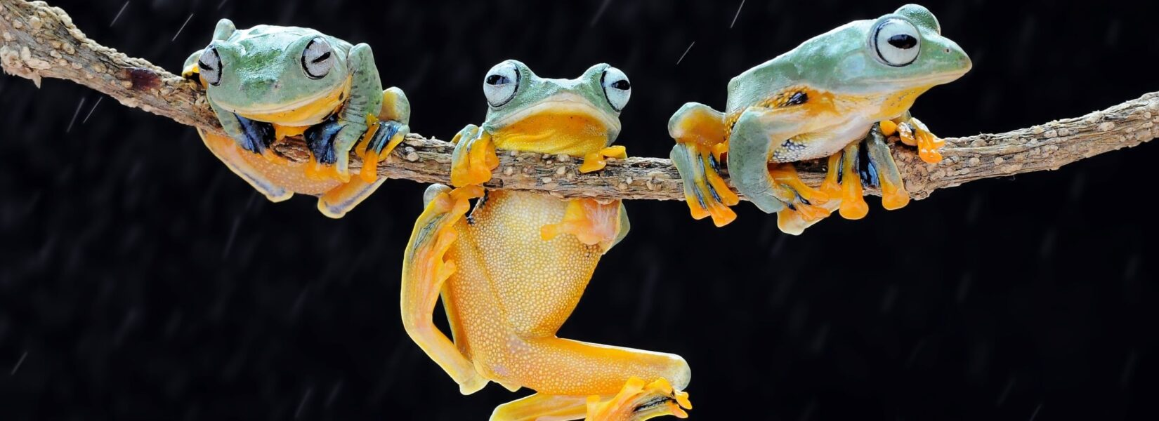 Dreaming About Frogs – Meaning & Interpretation of Frog Dreams